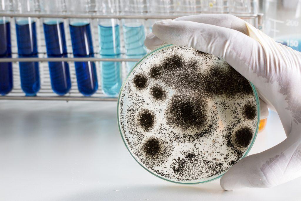 mold-testing-company